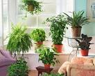 Фото растения на доме