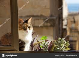 Katze Sitzt Auf Dem Balkon Drei Farben Katze Im Unscharfen