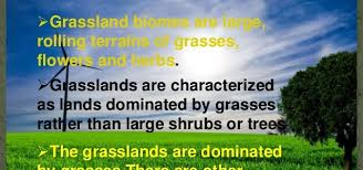 What Are Biomes What Is Grassland Biomes Definition Types Facts Check