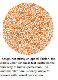 essay on color blindness