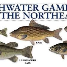 Freshwater Fish Chart Freshwater Fish Chart
