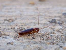 a cockroach on the ground