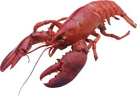 Lobster Cartoon Transparent & PNG ...