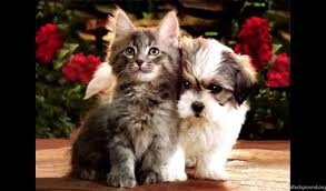 cute kittens and puppies wallpaper. Contemporary Kittens PlayStation 960x544 And Cute Kittens Puppies Wallpaper 6