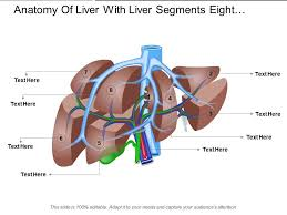 Liver Anatomy Anatomy Of Liver With Liver Segments Eight Segments