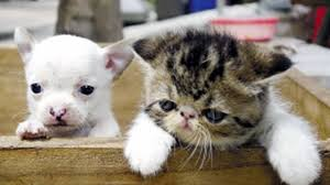 dogs and cats having babies. Beautiful Cats For Dogs And Cats Having Babies YouTube