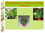 комнатные растения 2 класс окружающий мир презентация по фгос