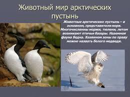 Картинки по запросу картинки на тему животный мир