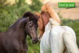 Vier Organisaties Werken Samen Tegen Eenzaamheid Bij Paarden Knhs