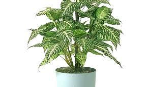 indoor plants no sunlight best indoor flowering plants low light unique by no indoor plants that dont need sunlight australia