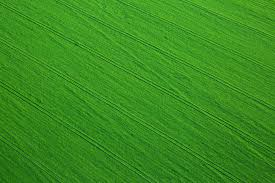 grass field aerial. Aerial View Of A Field Grass