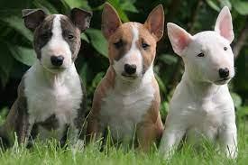 We did not find results for: Filhote De Bull Terrier Tudo Que Voce Precisa Saber