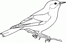 Small Picture Bird Coloring Pages Bestofcoloring with Bird Coloring Pages