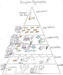 Ecosystem Pyramid Chart Ecosystem Pyramid The Wonders Science Education