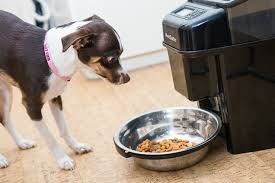 a small dog looking at an automatic pet food dispenser with a stainless steel bowl