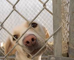 dog shelters archives page of orvis news powerful essay inside the life of an unwanted dog