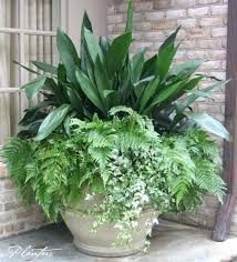 a permanent pot planting cast iron autumn ferns and variegated ivy outdoor potted large plants uk