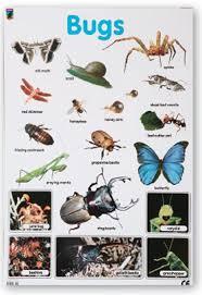 Bugs Chart