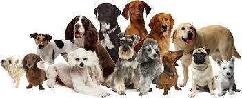 lots of dogs together. Plain Lots VIPDogspngpagespeedce_ScnWhsQVDIugjInJDnUPpng Intended Lots Of Dogs Together E