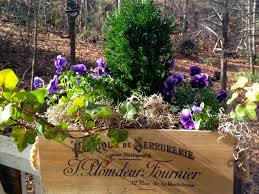 Looking for a good deal on box flower? Plant A Winter Window Box Hgtv