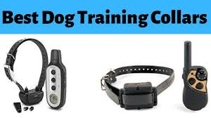 Best Dog Training Collars - TOP 10 Dog ...