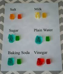 best chemistry science fair projects ideas fun  gummy bear science experiment more