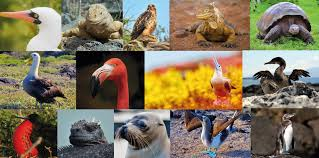 Guía 2021 de las Especies más Icónicas que Encontrarás en Galápagos