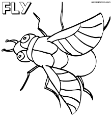 Fly Coloring Page Fly Coloring Page 14330 Free Coloring Pages For ...