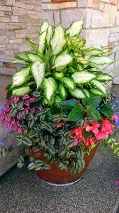 30 Unique Garden Design Ideas  Tall Plants Plants And GardensContainer Garden Ideas Photos