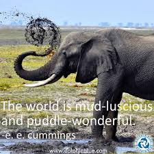 Elephant Quote 96 Images In Collection Page 1