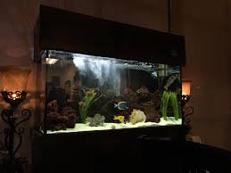 fish tank at my doctors office has all of the fish from finding nemo in it