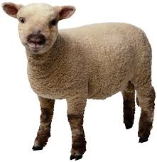 Sheep Png Image Free Download Ideas For A Lamb Tattoo Pinterest