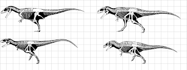 carcharodontosaurus size carcharodontosaurus saharicus v giganotosaurus carolinii