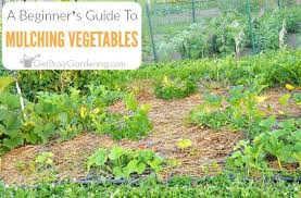 beginner vegetable garden. Perfect Vegetable Beginneru0027s Guide To Mulching A Vegetable Garden Beginner E