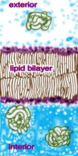 biodotedu
