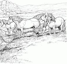 Small Picture Coloring Pages Wild Horses Coloring Pages Printable