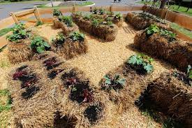 straw bale gardening pros and cons