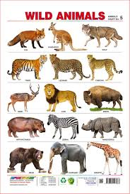 Animal Chart For Kids Animal Chart For Kids