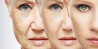 Image result for skin aging
