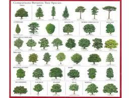 Tree Identification Chart Bing Images Tree Leaf