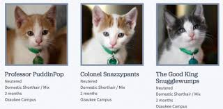 humane society kittens for adoption.  Kittens WisconsinHumaneSocietyCatNames685337  For Humane Society Kittens Adoption