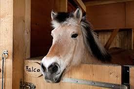 Schöne Pferdenamen Für Stute Und Hengst Die Tierexperten