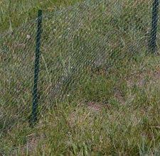 Super easy to install Chicken Wire Fence Lets hope it keeps the