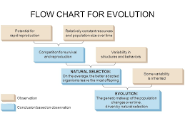 What Is Evolution The Process Of Change In The Traits Of