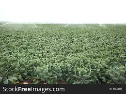Crops Irrigation Free Stock Images Photos 20949213