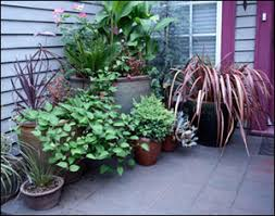 Small Picture Container Gardening Gardening Solutions University of Florida