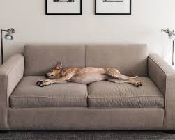 best sofa for dogs. The Recipe For A Good Night\u0027s Sleep Doesn\u0027t Change Much Between Us Humans And Our Cuddly Pets. Ingredients Are Quite Simply Diet, Exercise Restful Best Sofa Dogs Z