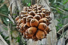 Resultado de imagen de fotos de la deforestación por el aceite de palma