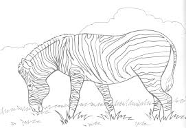 Small Picture Zebra coloring pages in grassland ColoringStar