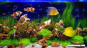 Fish Tank Fish Tank Soothing Sounds Aquarium Bubbling White Noise 10